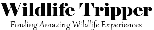 Wildlife Tripper - Finding Amazing Wildlife Experiences